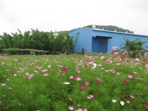 美麗花朵滿坑子