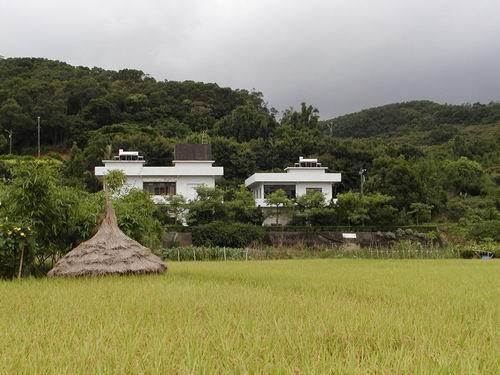 坑子的稻田與稻米