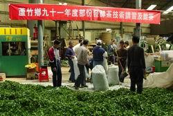 於新星製茶場舉辦的茶葉技術講習及競賽