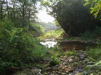 赤塗崎溪水蘊含著豐富的生態